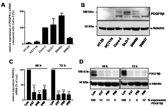 Relative mRNA expression of PDGFRβ in CRC cells and siRNA-mediated knockdown of PDGRβ in SW480 cells.