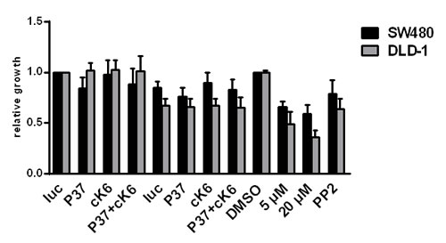 FIGURE 6 : Influence of SRC inhibition on the proliferation capacity of CRC cells.