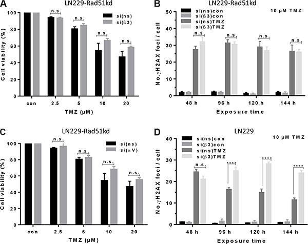 Determination of cell viability and induction of γH2AX foci in Rad51 knockdown cells upon TMZ/αVβ3 integrin silencing.