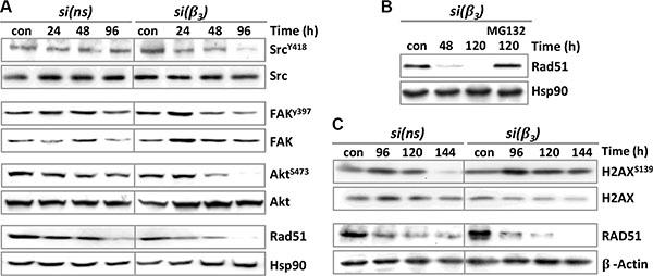 Expression of integrin signaling kinases, DNA repair proteins and apoptotic factors upon TMZ/αVβ3 integrin silencing.