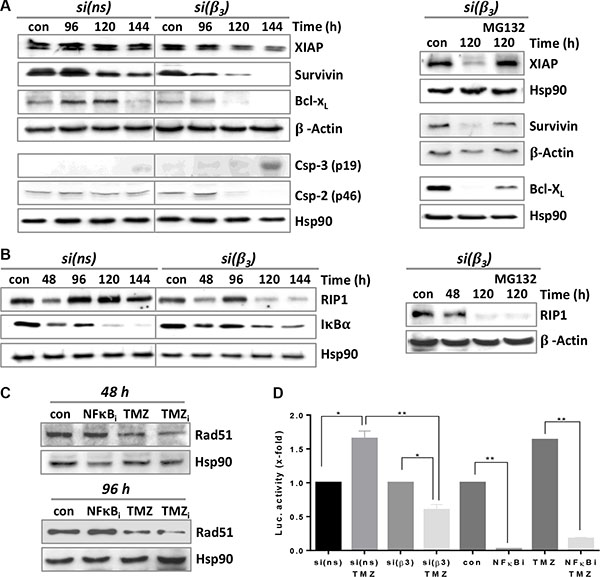 Expression of different pro- and anti-apoptotic factors upon TMZ/αVβ3 integrin silencing.