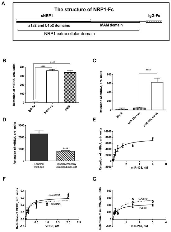 Recombinant NRP1 binds miRNA mimics.