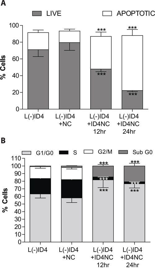 Effect of ID4NC on apoptosis and cell cycle in L(-)ID4 cells.