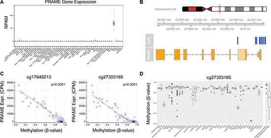 Transcriptional activation of PRAME is associated with hypomethylation of the PRAME promoter in uveal melanoma.
