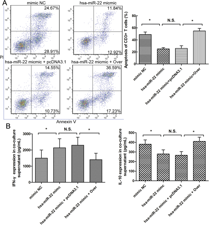 Role of miR-22 in HSC-derived T cell apoptosis and Th cytokine balance skewing.