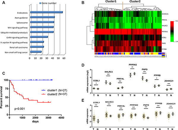 Identification of optimal gene signature for OS prediction.