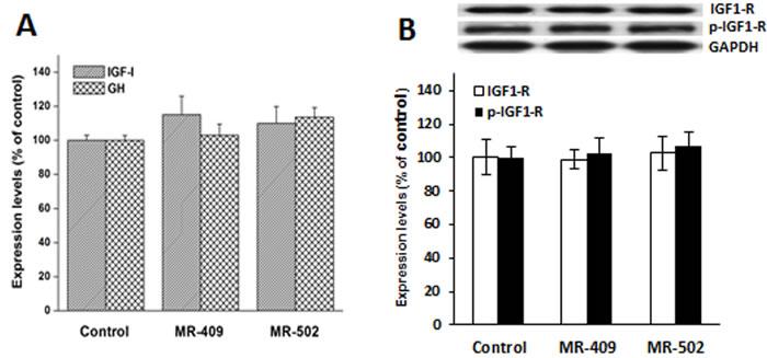 Expression of insulin-like growth factor-1 (IGF-1), growth hormone (GH) and IGF-1 receptor (IGF1-R) in human dermal fibroblasts treated with GHRH agonist.