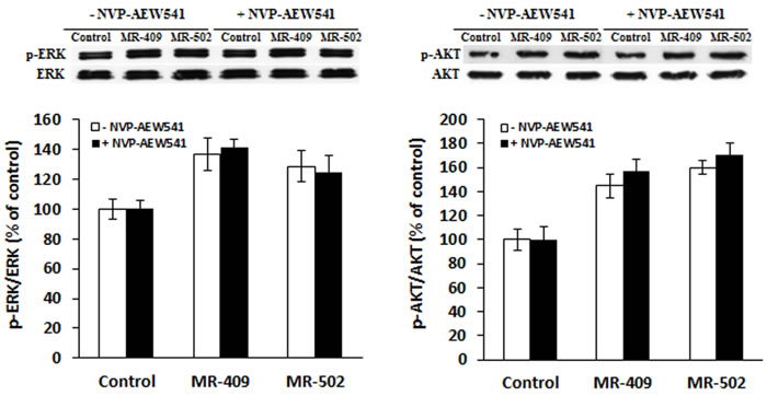 Activation of ERK and AKT pathways by GHRH agonists.