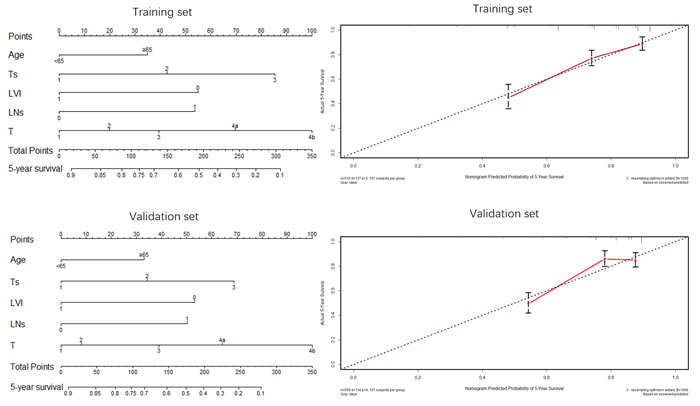 Nomogram plots and calibration curves based on age, Ts, LVI, LNs and T stage.