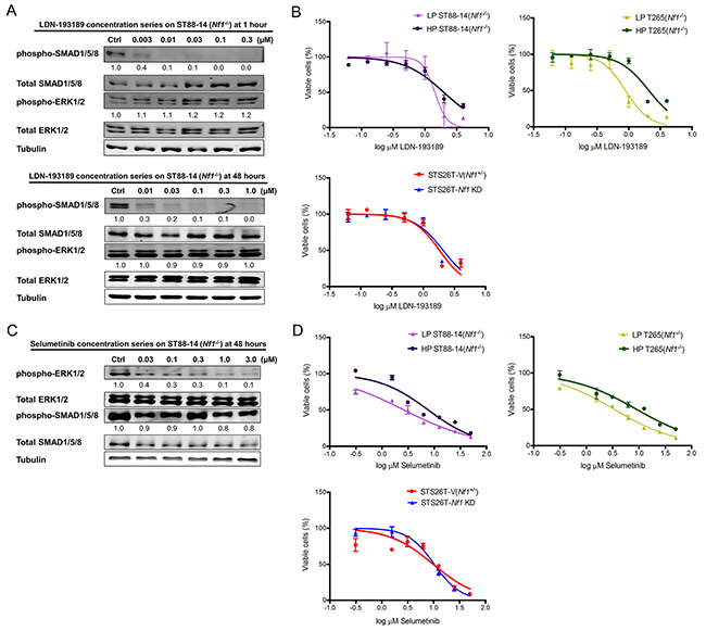 Single agent treatment with LDN-193189 or selumetinib affects cellular viability at concentrations higher than the biochemically effective dose.