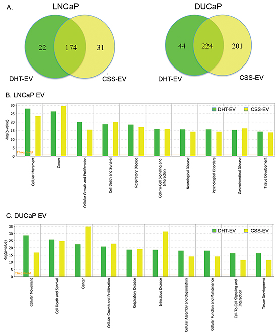 Comparative analysis of vesicular proteins isolated from LNCaP and DUCAP cells.