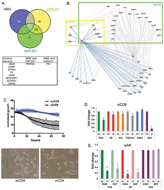 CD9 is an EV-derived regulator for prostate cancer proliferation.