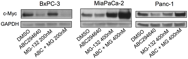 Effects of ABC294640 on proteasomal degradation of c-Myc.