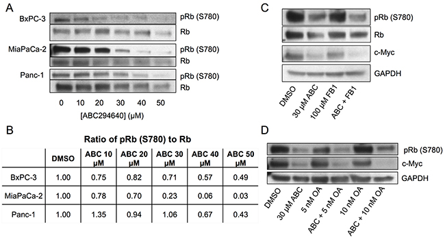 Effects of ABC294640 on phosphorylation of Rb.