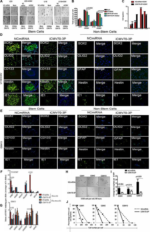 CMV70-3P regulates glioma stemness.