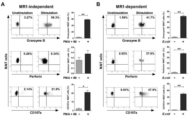 Cytotoxic profile of MAIT cells.