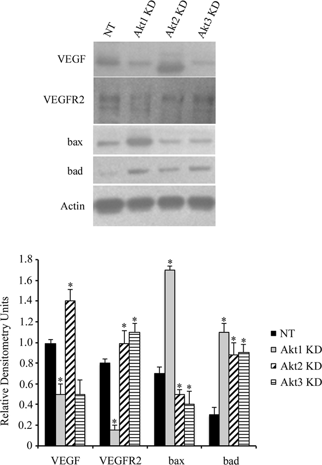 Akt isoform knockdown alters ovarian cancer cell signaling.