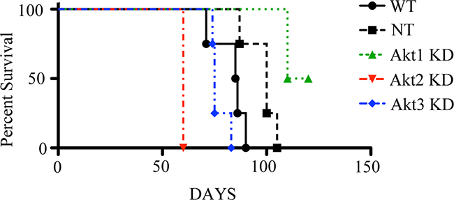 Tumor cell Akt isoform specific knockdown differentially impacts survival in a mouse model of epithelial ovarian cancer.