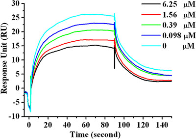 SPR competitive binding curves with increasing Ar5Y_4 concentrations (0 μM, 0.098 μM, 0.39 μM, 1.56 μM, 6.25 μM) with hPD-L1 immobilized on the sensor chip for investigating the ability of Ar5Y_4 blocking the interaction of hPD-1 and hPD-L1.