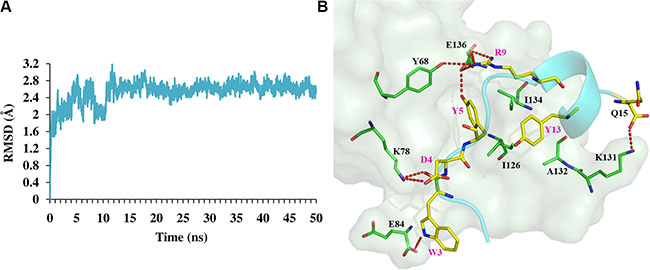 MD simulation results of peptide Ar5Y_4 in complex with hPD-1.