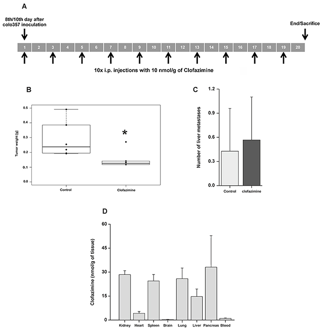 Reduction of tumor weight by clofazimine treatment in a SCID orthotopic PDAC model.