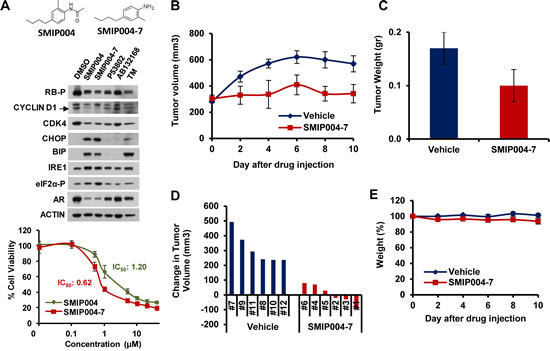 Effect of a SMIP004 analog on tumor growth in vivo.