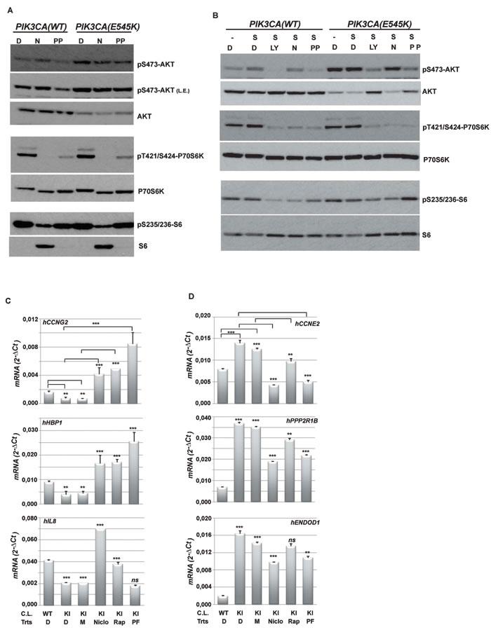 Niclo and PP inhibit the phosphorylation of PI3K-dependent molecular targets.