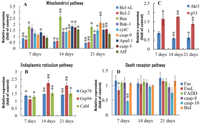 Relative expression of genes regulating apoptosis in bursa of Fabricius from the broilers exposed to the control and AFB1 diets.