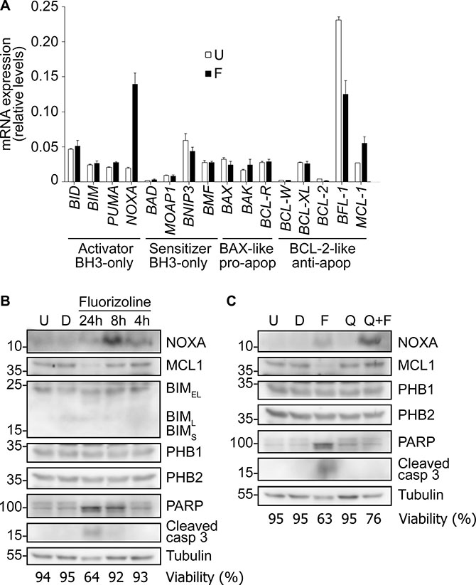 Fluorizoline modulates the expression of BCL-2 family members in the U-937 AML cell line.