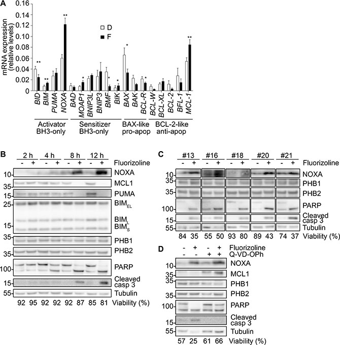 Induction of NOXA mRNA and protein levels upon fluorizoline treatment in primary AML samples.