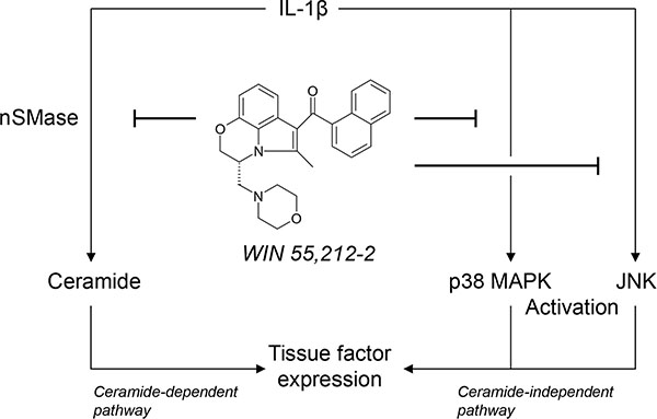 Scheme showing the proposed mechanism underlying the inhibitory effect of the synthetic cannabinoid WIN 55,212-2 on endothelial expression of tissue factor (TF).