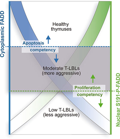 Model for differential aggressiveness of the T-LBL sub-groups.