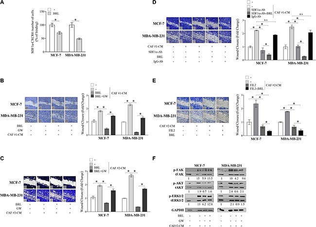 BRL antagonizes motility and signaling activation induced by cancer-associated fibroblasts -derived conditioned media in breast cancer cells.