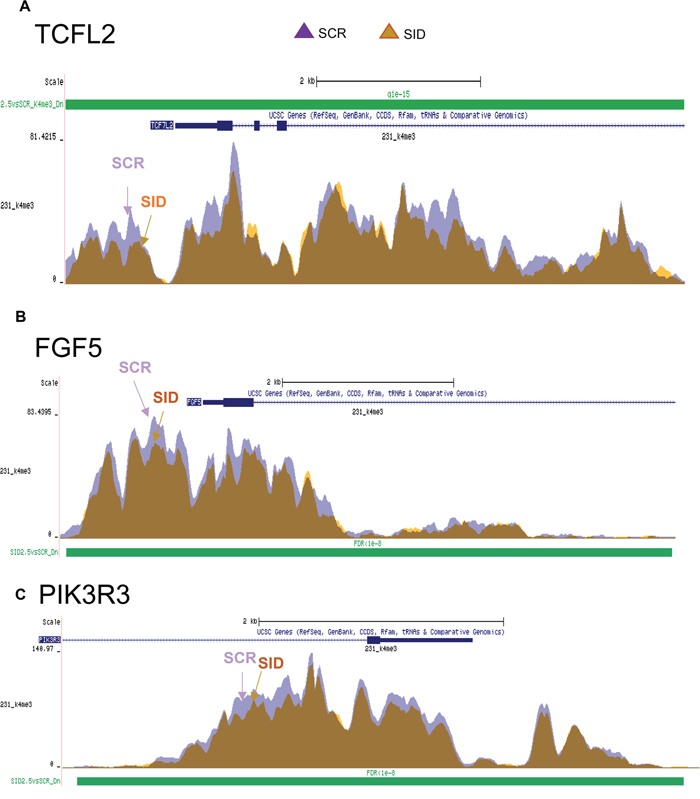 SID peptide treatment markedly inhibits H3K4Me3 marks in a set of Wnt and EMT pathway genes.