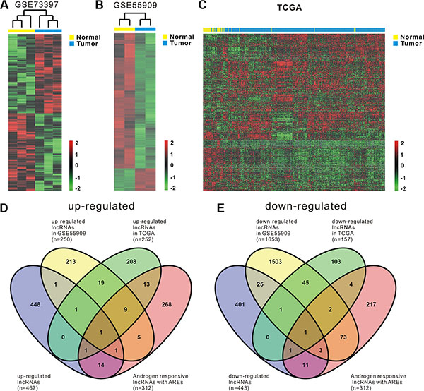 Comprehensive analysis of differentially expressed androgen-responsive lncRNAs in PCa patients.