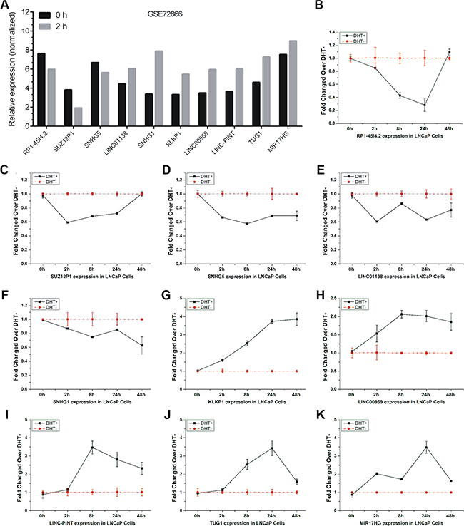 Validation of androgen-responsive lncRNAs in a time-dependent study.