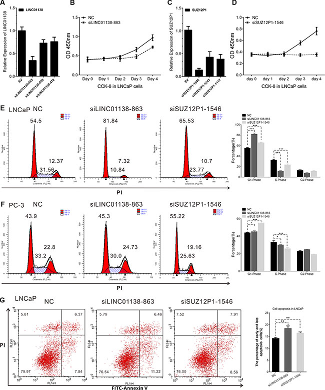 LINC01138 and SUZ12P1 promotes cell proliferation, cell cycle and inhibits apoptosis of PCa.