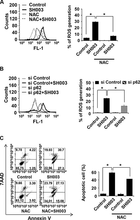 SH003-induced p62 accumulation causes ROS-mediated apoptotic cell death.