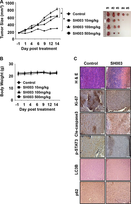 SH003 suppresses in vivo tumor growth.