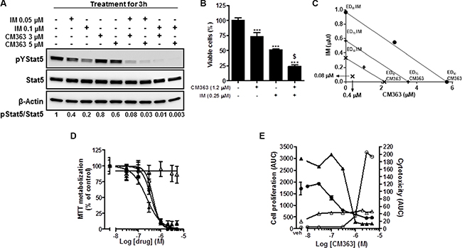 Coadministration of CM363/IM interacts synergistically to inhibit pTyr694-Stat5, cell viability in CML and to circunvent resistance of CML to IM.