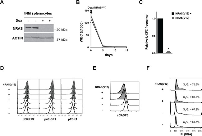 Suppression of NRAS(V12) leads to cell death but not cell cycle arrest in NRAS(V12) & Mll-AF9-driven murine AML cells.