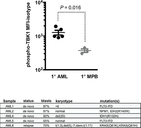 Patient-derived AML blasts have increased levels of RALB-TBK1 signaling compared to normal leukocytes.