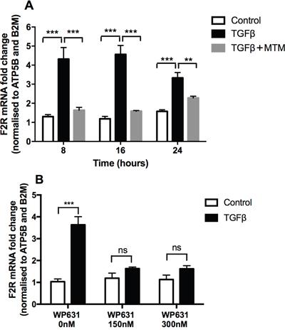 TGFβ-mediated PAR-1 upregulation is blocked by Sp1 inhibitors.