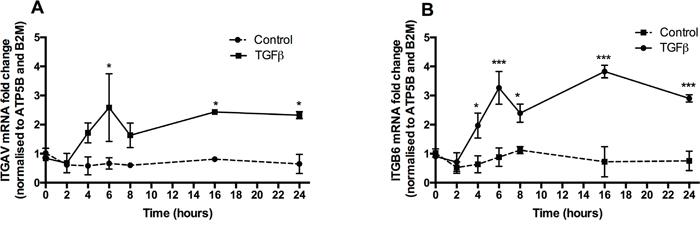 TGFβ promotes αv and β6 integrin sub-unit gene expression.