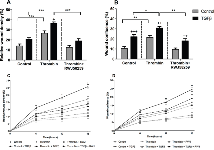 The effect of TGFβ treatment on A549 lung adenocarcinoma cells migration.