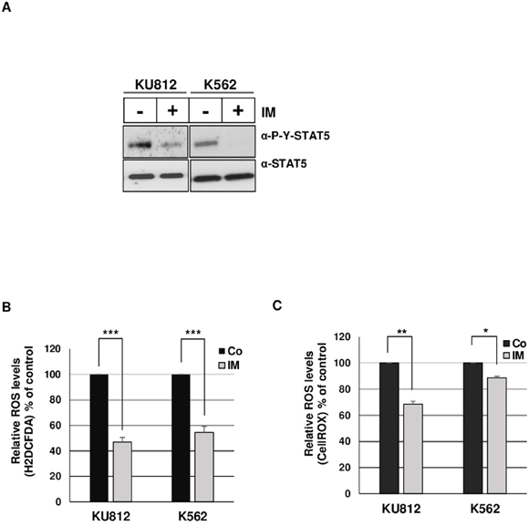 Bcr-Abl induces ROS production in leukemia cells.