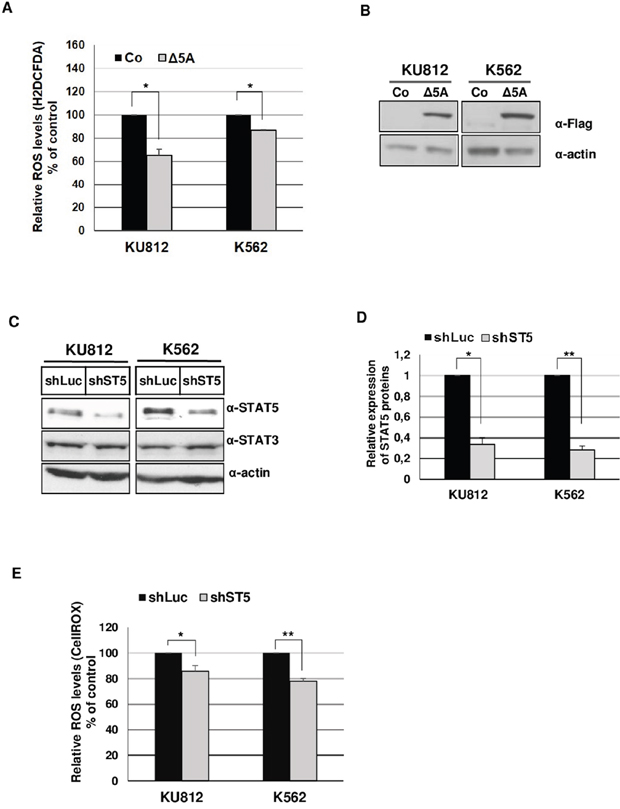 STAT5 promotes ROS production in Bcr-Abl+ leukemia cells.