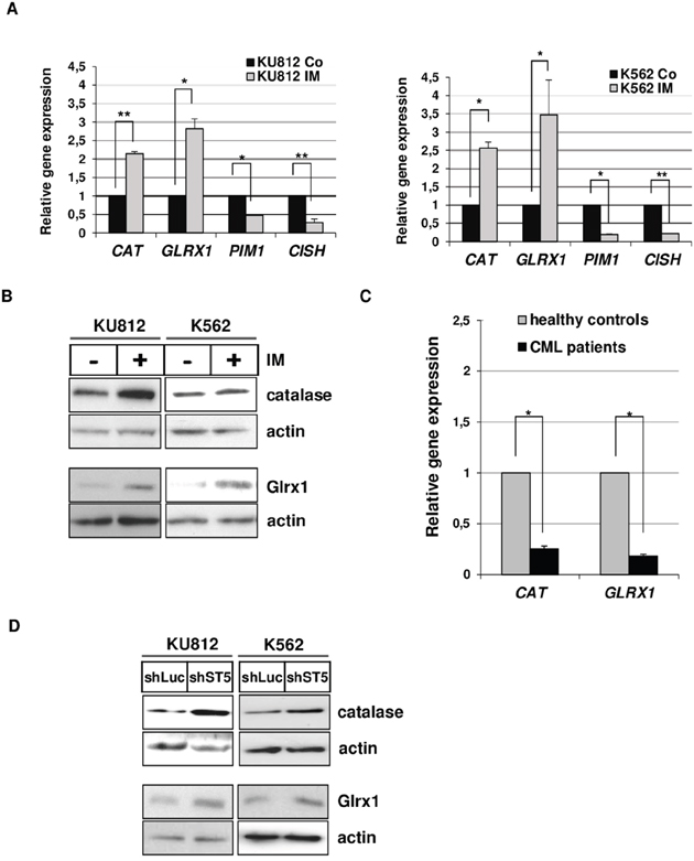 STAT5-dependent repression of Catalase and GLRX1 expression in CML cells.