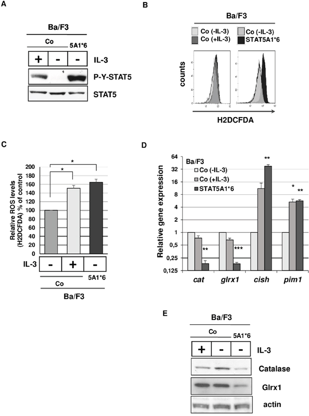 Tyrosine-phosphorylated STAT5 induces ROS production and inhibits catalase and Glrx1 expression in Ba/F3 cells.
