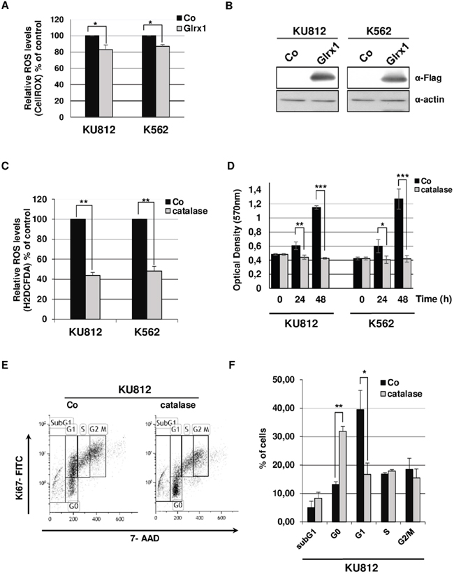 Effects of catalase and Glrx1 on ROS production and proliferation of Bcr-Abl+ leukemia cells.